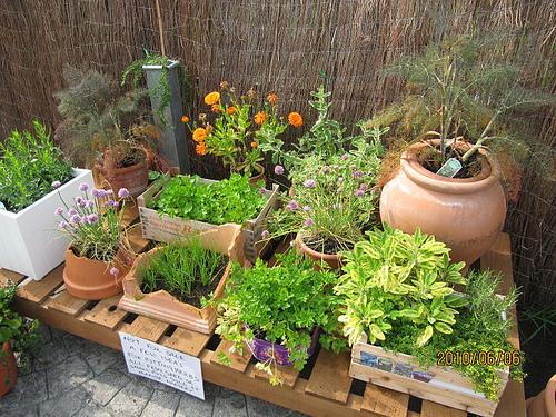 container flower pot for garden