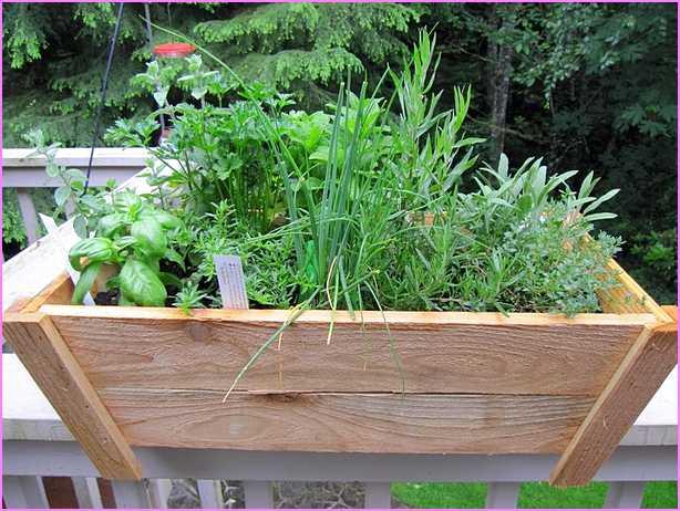 container herb pot for backyard garden
