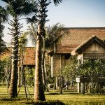palm tree in the fore ground in a phum baitang village in Siem Reap Cambodia