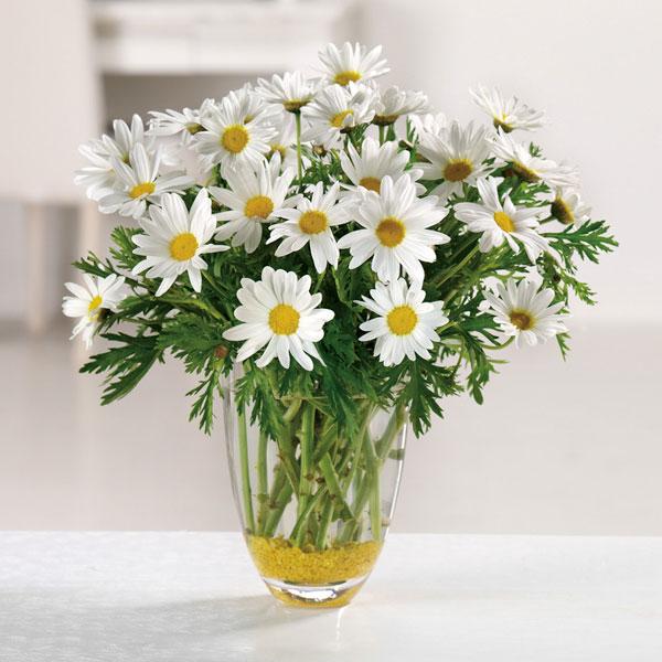 daisy flower arrangement in vase