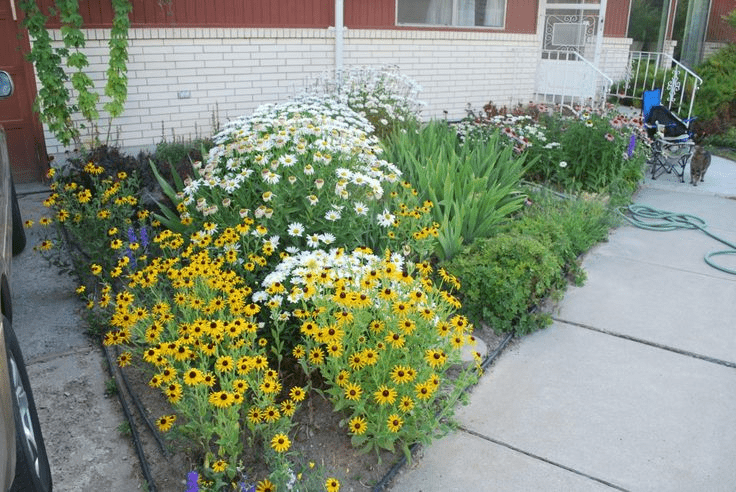 daisy flower bed in tiny front yard