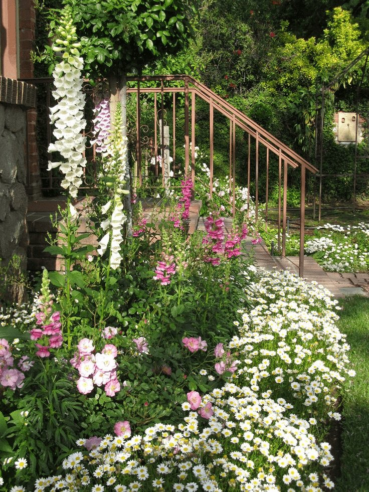 large-daisy-flower-bed-for-frontyard