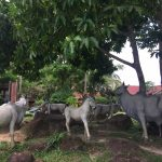 lots of statue of cambodian cows and a horse