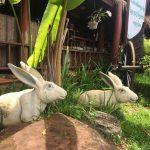 rabbit statue in picnic cambodia resort along national road 4