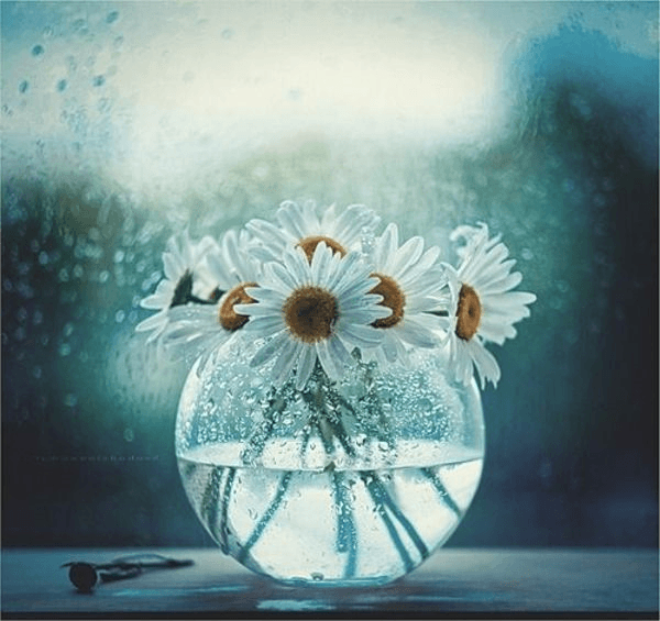 white and yellow daisy flower arrangement in a fish tank