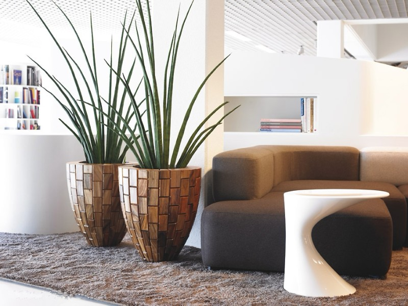 contemporary room with plant