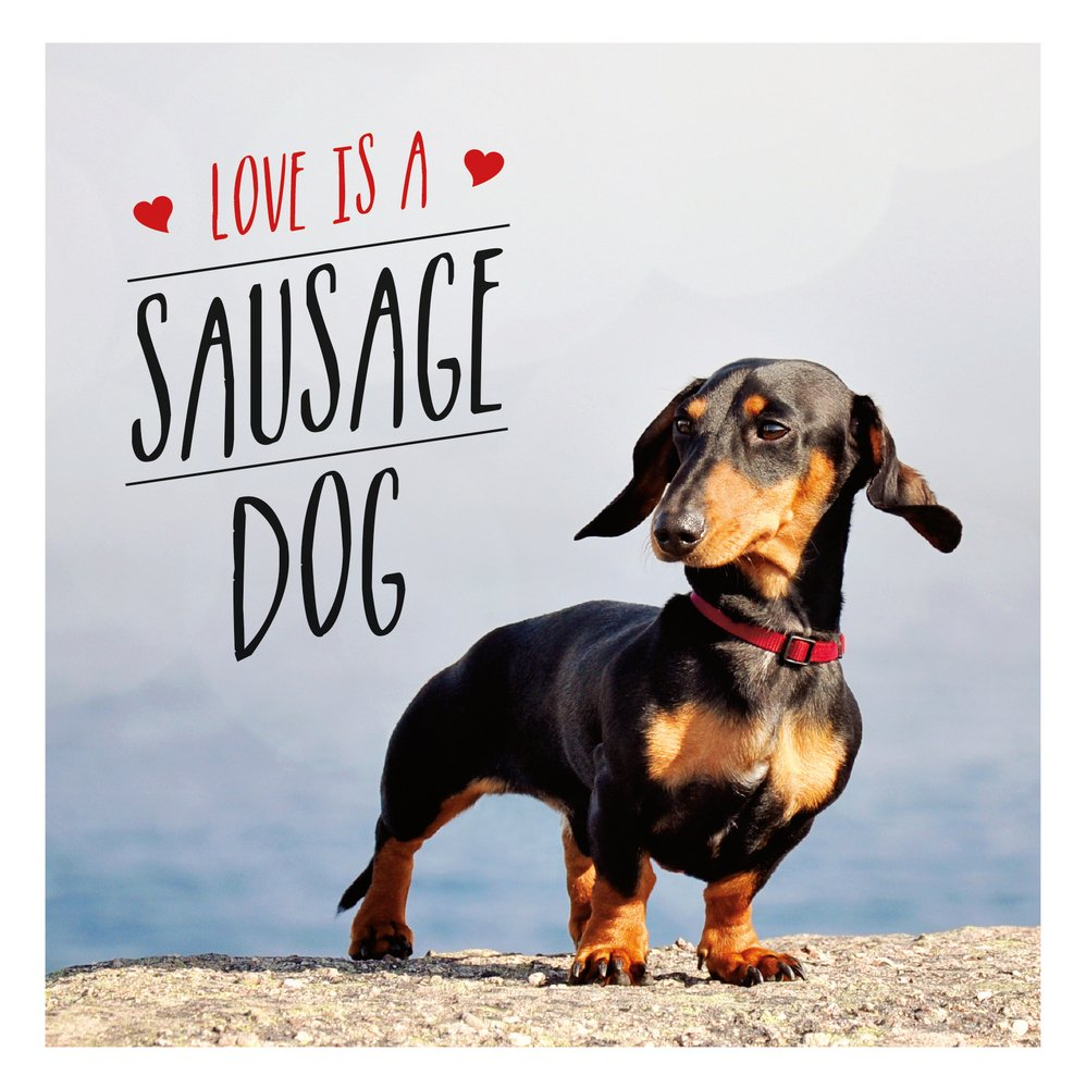 love is a sausage dog gift book