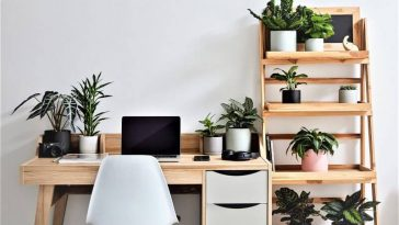 indoor planters on working desk