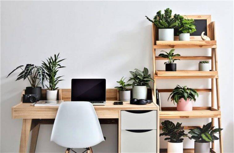 indoor planters on working desk